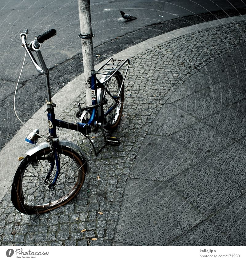 streetwalker Colour photo Subdued colour Exterior shot Deserted Day Bird's-eye view Animal portrait Bicycle Environment Climate Climate change Town Pigeon