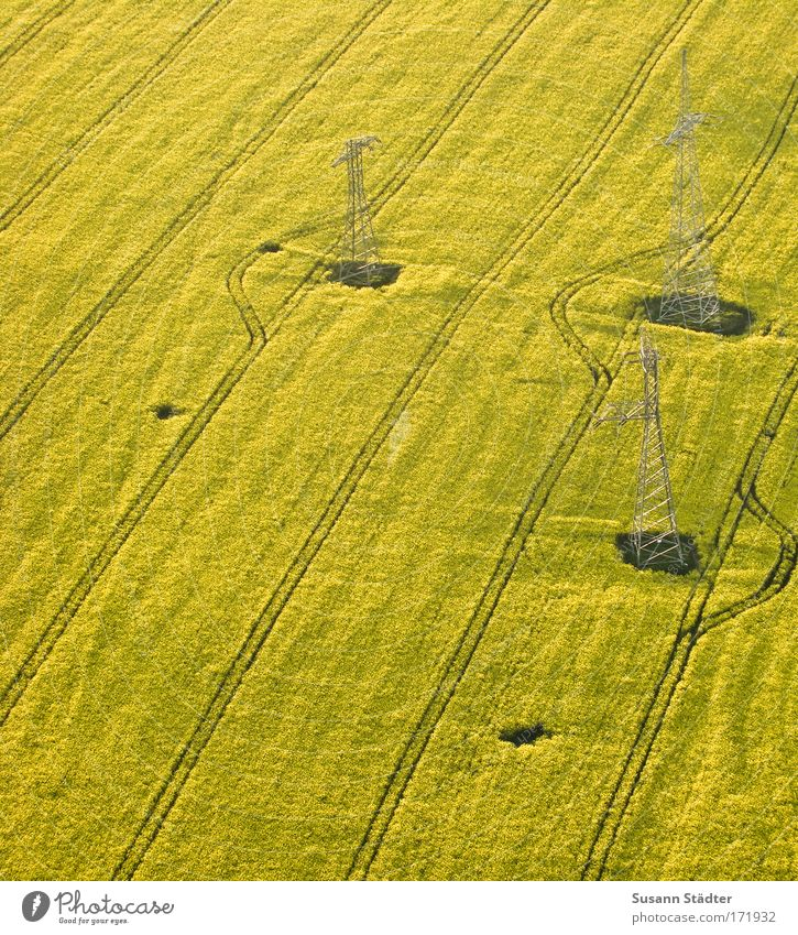 Nature Plant Summer Animal Earth Field Energy industry Aviation Bushes Technology Logistics Beautiful weather Agriculture Hot Air Balloon Electricity pylon Agriculture