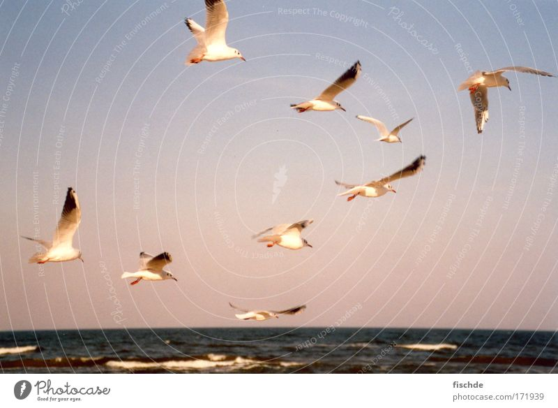 9 x seagull 1 x sea Colour photo Exterior shot Deserted Panorama (View) Harmonious Well-being Relaxation Vacation & Travel Tourism Trip Far-off places Freedom