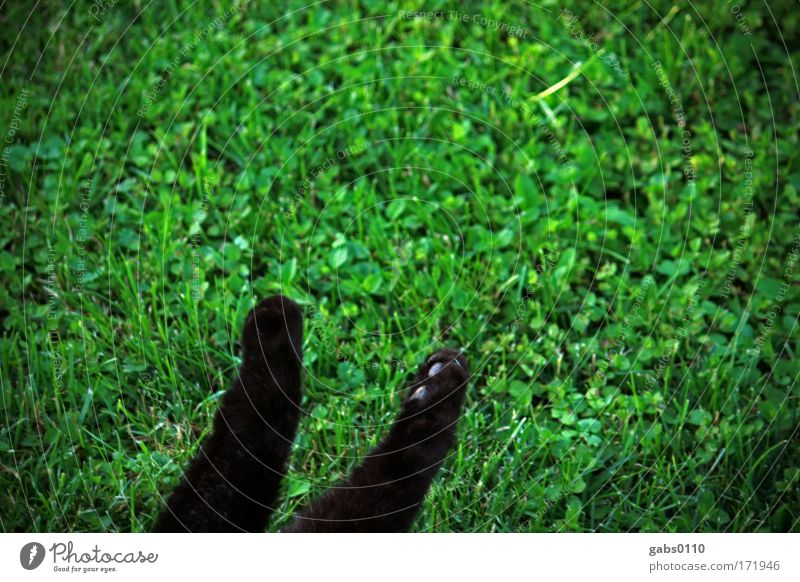 cat paws in green Colour photo Exterior shot Deserted Copy Space top Environment Nature Plant Animal Earth Grass Garden Meadow Pet Cat 1 Feeding To enjoy
