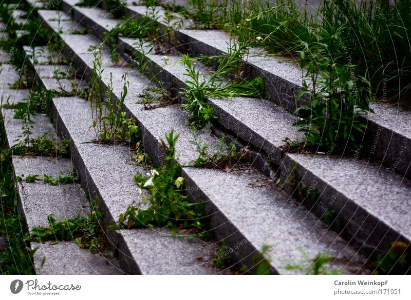 Green Life Architecture Emotions Building Gray Moody Germany Stairs Esthetic Authentic Europe Transience Manmade structures Landmark End