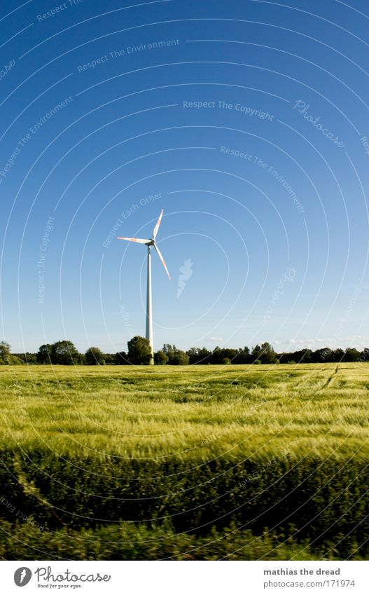 Nature Tree Sun Summer Relaxation Meadow Grass Warmth Landscape Air Field Wind Environment Large Horizon Energy industry