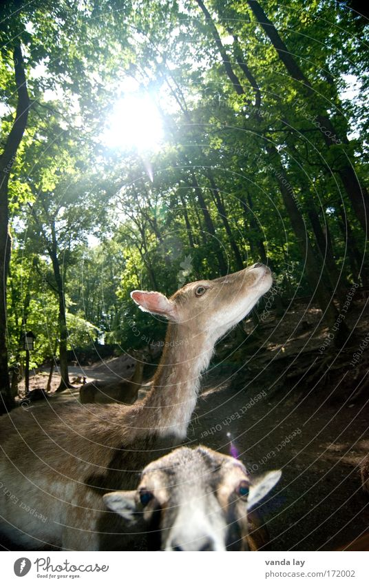 Expedition into the animal kingdom Colour photo Exterior shot Deserted Day Wide angle Animal portrait Looking Nature Landscape Plant Sun Summer Tree Wild animal