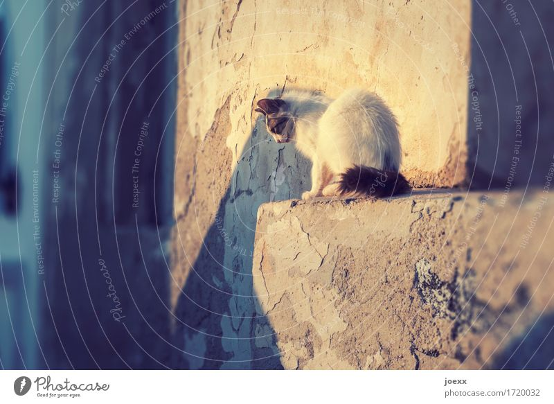 The right moment Wall (barrier) Wall (building) Pet Cat 1 Animal Sit Wait Curiosity Warmth Brown Yellow White Discover Observe Focus on Tense Colour photo