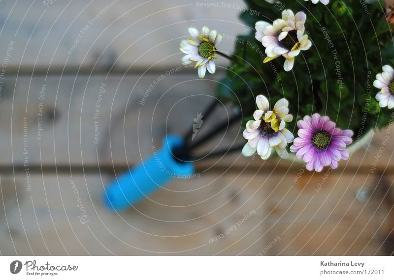 White Flower Blue Plant Relaxation Blossom Garden Wood Contentment Pink Growth Near Decoration Living or residing Wooden board