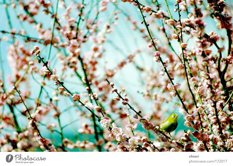 A spring breeze Nature Beautiful Sky Green Joy Animal Life Playing Window Blossom Spring Bird Art Small Pink Morning