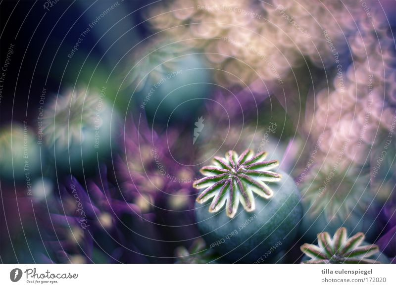 1 Experimental Abstract Pattern Structures and shapes Deserted Plant Flower Bushes Blossom Bouquet Faded To dry up Old Esthetic Exceptional Dark Fantastic