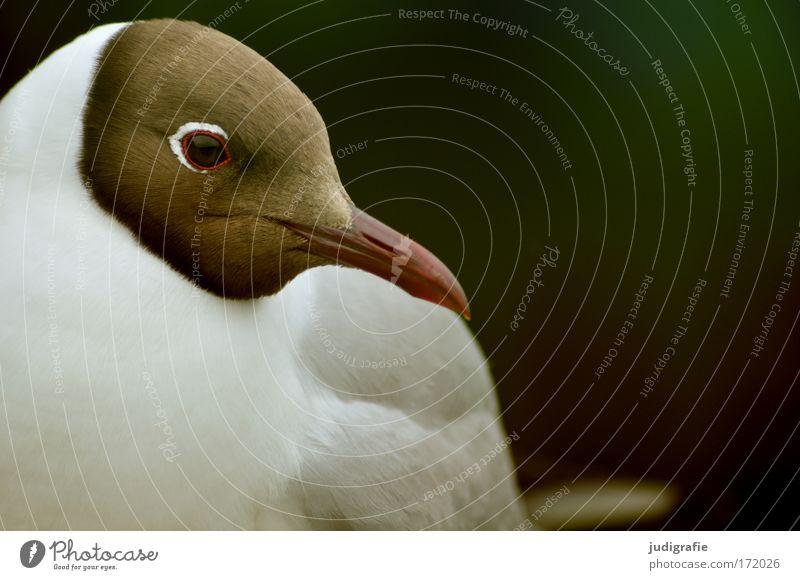 Nature Beautiful Eyes Animal Bird Feather Wild animal Cute Seagull Beak Black-headed gull