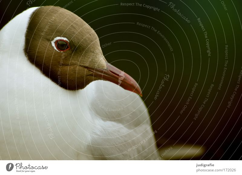 Nature Beautiful Eyes Animal Bird Feather Wild animal Cute Seagull Beak Black-headed gull