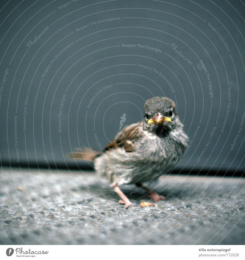 Animal Cold Baby animal Bird Wait Wild animal Wing Observe Sparrow Helpless Perturbed Plumed Inhibition Delivered Passerine bird Love and security