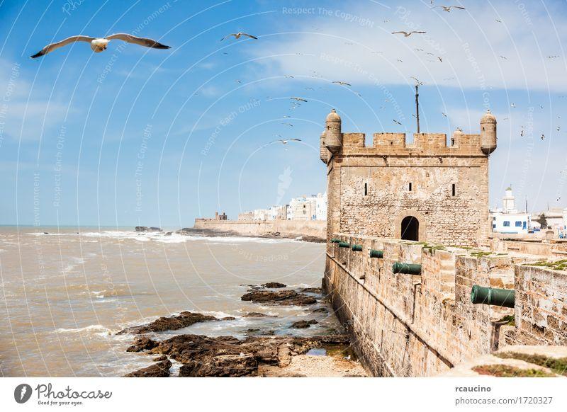 Essaouira: the Portuguese castle. Morocco Sky Vacation & Travel City Old Summer Landscape Ocean Coast Bird Waves Vantage point Seasons Castle Harbour Africa Seagull