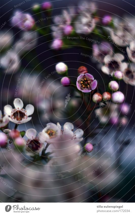 5 Colour photo Blur Shallow depth of field Plant Summer Flower Blossom Park Bouquet Fragrance Exotic Fantastic Happiness Fresh Beautiful Kitsch Natural