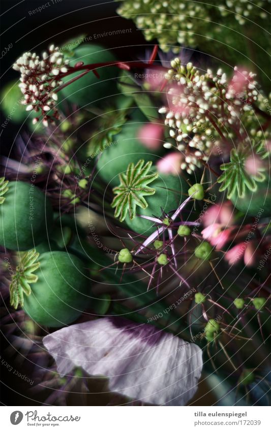 6 Colour photo Interior shot Experimental Abstract Pattern Structures and shapes Deserted Shadow Plant Blossom Bouquet Exceptional Dark Fantastic Multicoloured
