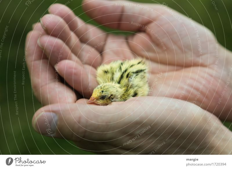 In need of help! Human being Fingers 1 Animal Pet Farm animal Yellow Help Chick Hand Landscape format Protection Bird Animal face Love of animals