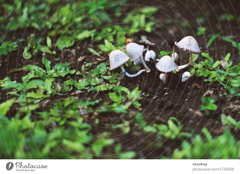 mushroom Nature Plant Green White Grass Growth Dirty Elements Mushroom Foliage plant Ivy Wild plant