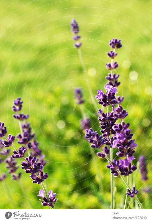 summer dream Colour photo Copy Space top Day Sunlight Shallow depth of field Plant Spring Summer Beautiful weather Flower Meadow Glittering Bright Green Violet