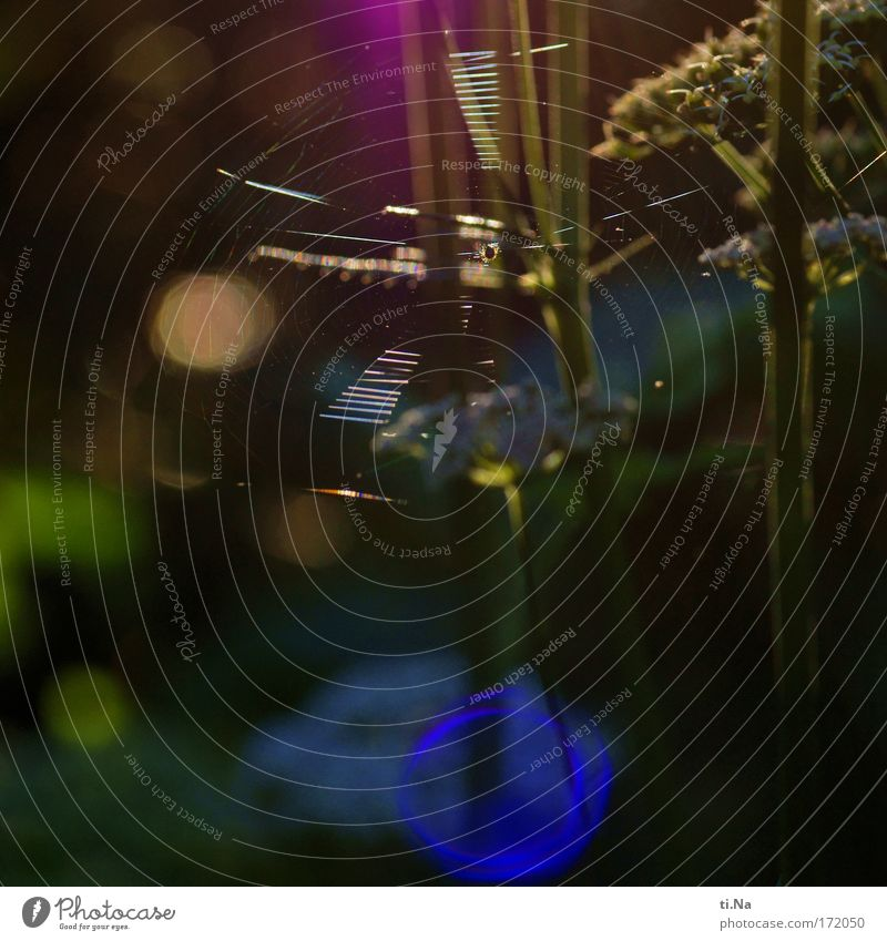 a net in the sun Colour photo Exterior shot Evening Environment Nature Landscape Plant Animal Beautiful weather Wild plant Garden Park Meadow Field Spider 1