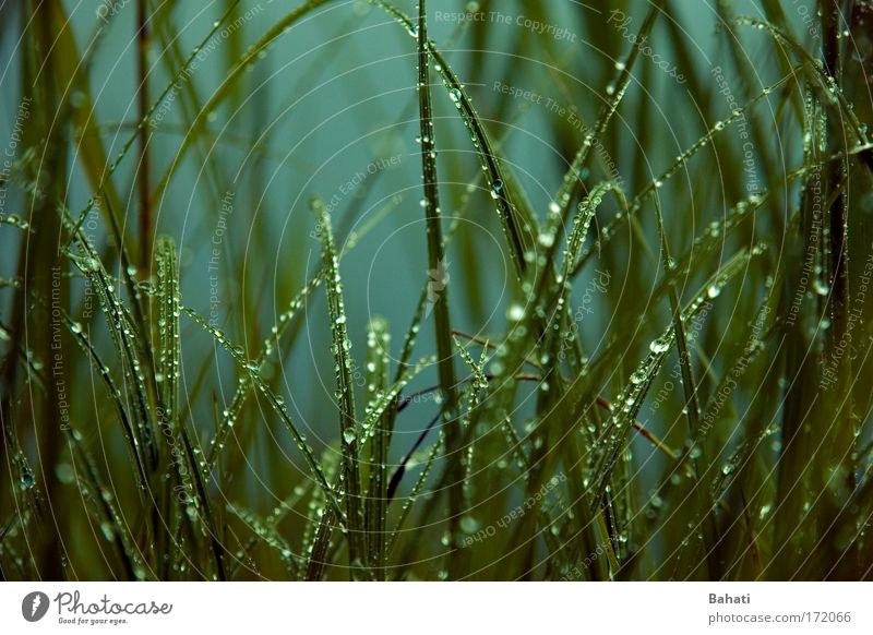 raindrop Colour photo Exterior shot Deserted Day Drops of water Rain Grass Wild plant Nature Green Visual spectacle