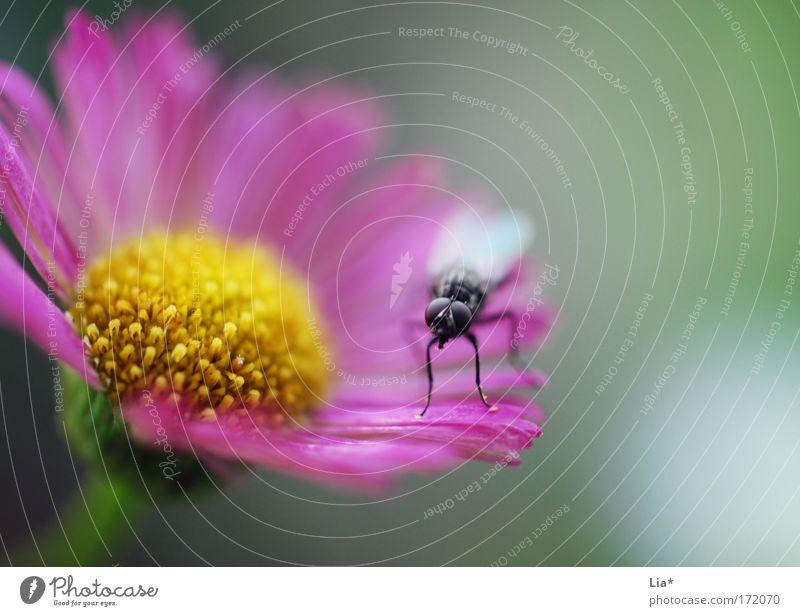 Flower Green Plant Animal Yellow Pink Fly Sit Blossoming Brash