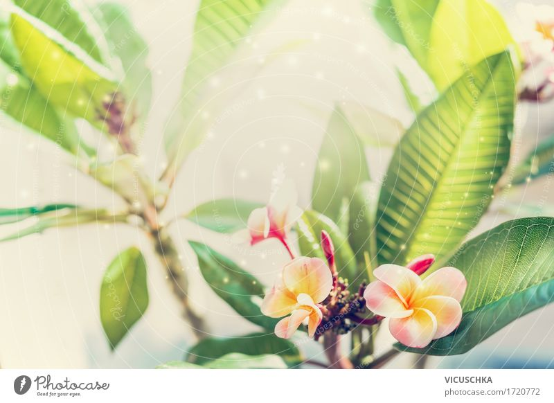 Tropical Frangipani Plant Lifestyle Relaxation Spa Summer Garden Nature Spring Beautiful weather Warmth Flower Leaf Blossom Exotic Park Blossoming Yellow Design