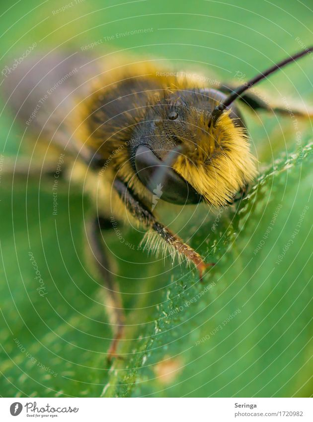 mohawk cut Nature Plant Animal Spring Summer Grass Bushes Leaf Blossom Garden Park Meadow Forest Wild animal Fly Bee Animal face Wing 1 Flying Honey bee Wasps