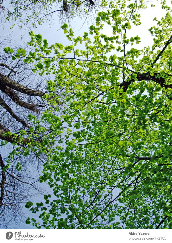 [Harusaki-DD] Fresh green. Colour photo Exterior shot Deserted Day Light Contrast Nature Sky Cloudless sky Sun Beautiful weather Tree Leaf Park Free Bright