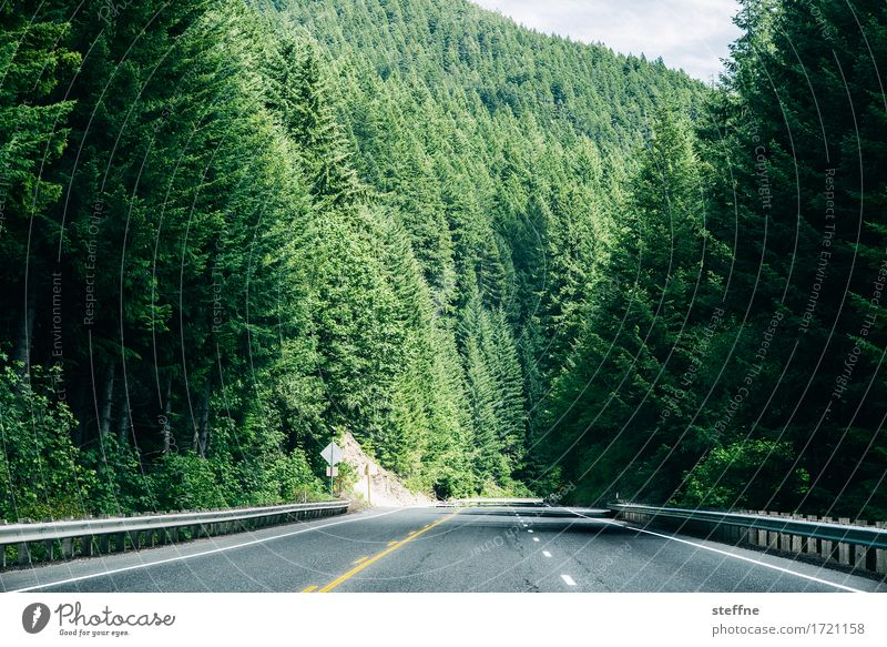 green wall Nature Landscape Summer Beautiful weather Tree Green Forest Spruce forest USA Oregon Street Trip Hiking Colour photo Exterior shot Copy Space bottom