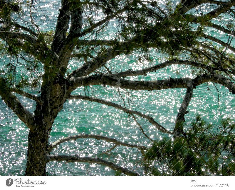 Nature Water Green Blue Tree Summer Glittering Island Europe Illuminate Bay Spain Beautiful weather Majorca Outskirts
