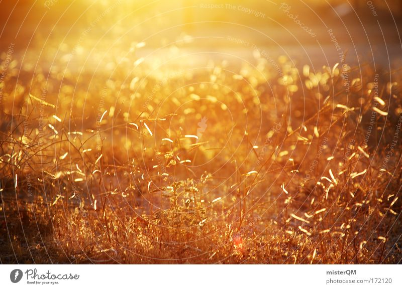 Nature Beautiful Plant Calm Relaxation Meadow Grass Warmth Earth Moody Lighting Gold Future Film To go for a walk Travel photography