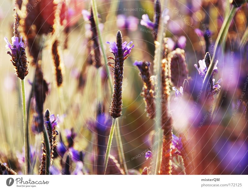 Nature Green Plant Summer Flower Calm Relaxation Meadow Emotions Landscape Blossom Grass Moody Dye Art Field