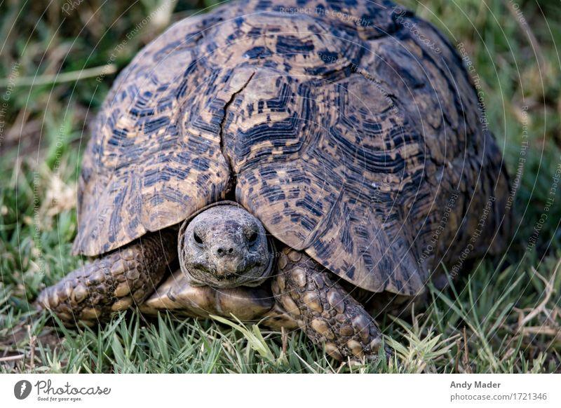 Old Beautiful Animal Wild animal Large Exotic Crack & Rip & Tear Shell Turtle