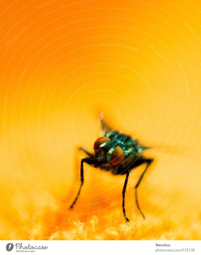 Nature Summer Animal Orange Fly Insect Wild animal Disgust