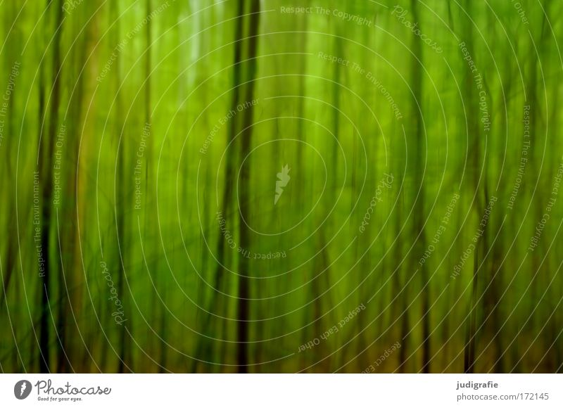 forest Colour photo Exterior shot Experimental Abstract Structures and shapes Day Blur Environment Nature Landscape Plant Animal Summer Tree Forest Green Fear
