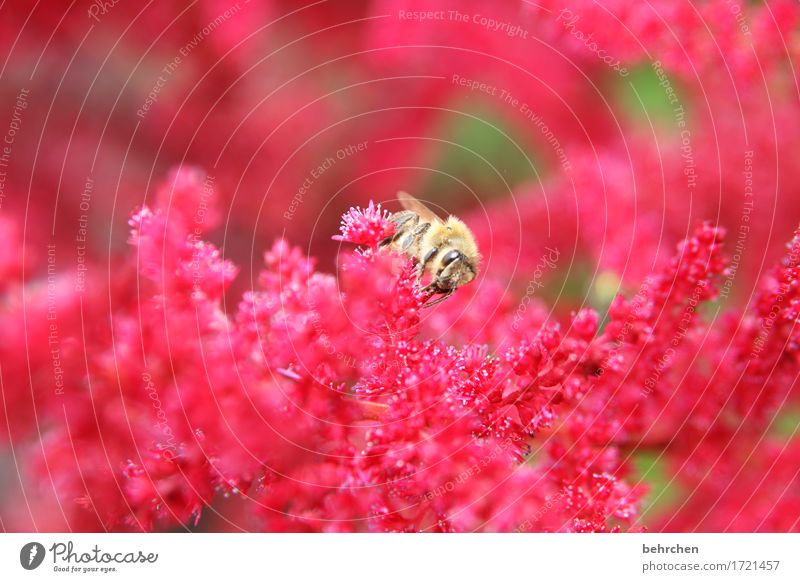 Nature Plant Summer Beautiful Flower Red Leaf Animal Blossom Meadow Small Garden Flying Park Wild animal Wing