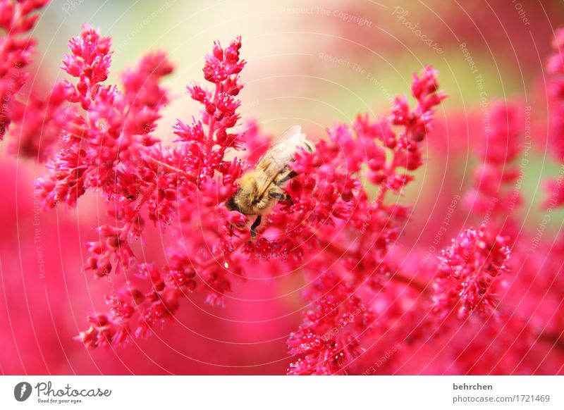 Nature Plant Summer Beautiful Flower Red Leaf Animal Blossom Meadow Small Garden Flying Park Wing Blossoming