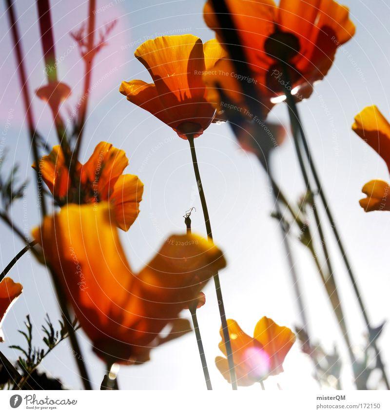 Nature Beautiful Sky Flower Plant Summer Meadow Blossom Dye Landscape Moody Orange Field Blue Sunrise