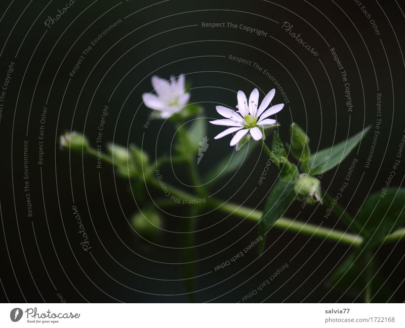 Nature Plant Beautiful Green White Leaf Calm Black Blossom Healthy Small Moody Design Esthetic Point Star (Symbol)