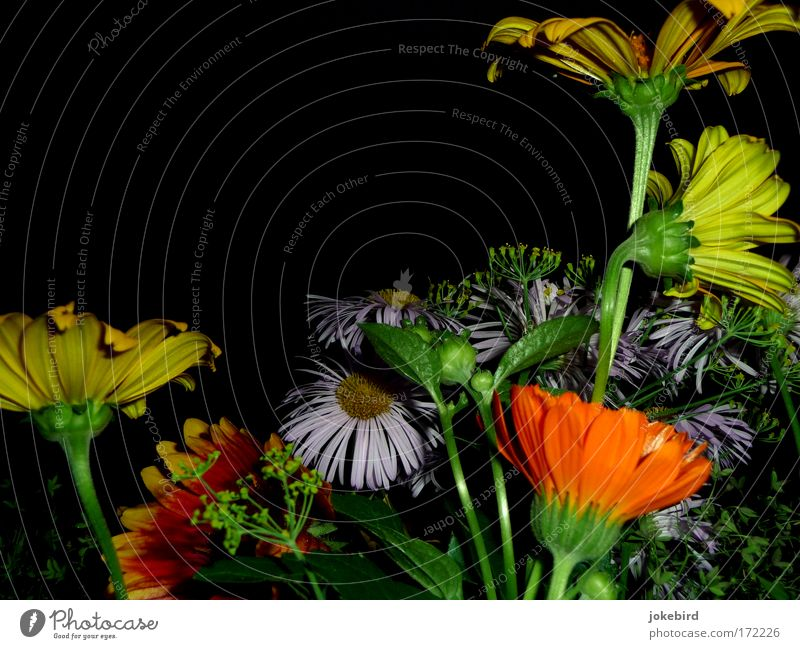 When I broke those flowers to you early that morning. Colour photo Deserted Copy Space top Evening Flash photo Summer Flower Blossom Stalk Rudbeckia Gazania