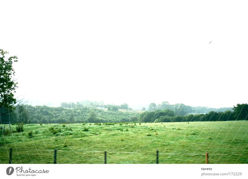Nature White Green Far-off places Loneliness Animal Meadow Landscape Movement Moody Bird Field Speed Hill Wild animal Juicy