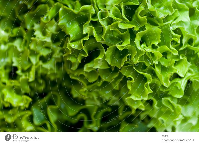 beautifully healthy Colour photo Interior shot Close-up Macro (Extreme close-up) Day Food Vegetable Lettuce Salad Organic produce Vegetarian diet Green
