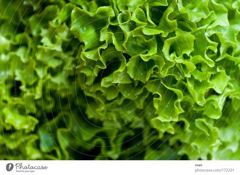 Green Food Nutrition Vegetable Organic produce Close-up Lettuce Salad Vegetarian diet