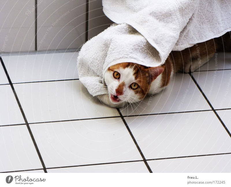 castle ghost Colour photo Interior shot Day Deep depth of field Central perspective Animal portrait Looking into the camera Wellness Towel Pet 1 To enjoy Fight
