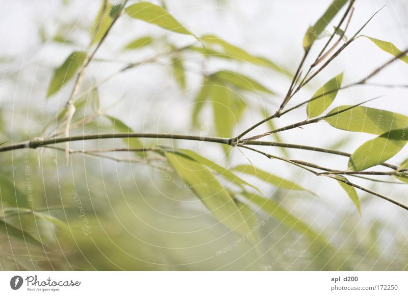 Nature Green Plant Yellow Relaxation Grass Contentment Power Environment Esthetic Exotic Foliage plant Wild plant