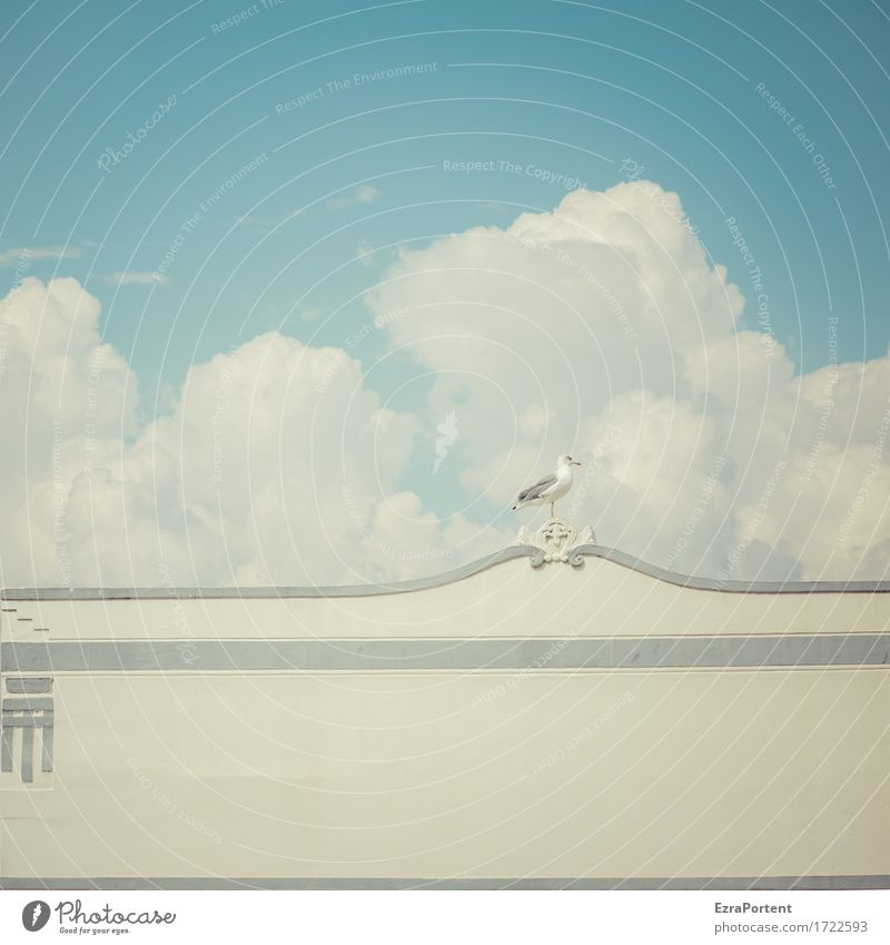 Sky Blue Summer White Clouds Animal House (Residential Structure) Calm Architecture Wall (building) Building Wall (barrier) Gray Bird Line Facade