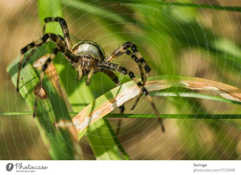 Plant Summer Animal Forest Meadow Grass Garden Park Field Wild animal Catch Animal face Crawl Spider Spider's web Spider legs