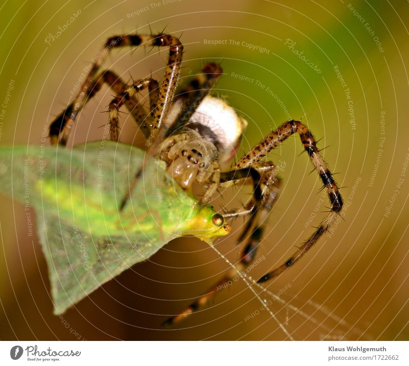 """regulus56: """"A Floral Fly Fate"""" Meat Organic produce Environment Nature Animal Summer Autumn Meadow Wild animal Spider Animal face Wing 1 2 Catch To feed Creepy"""