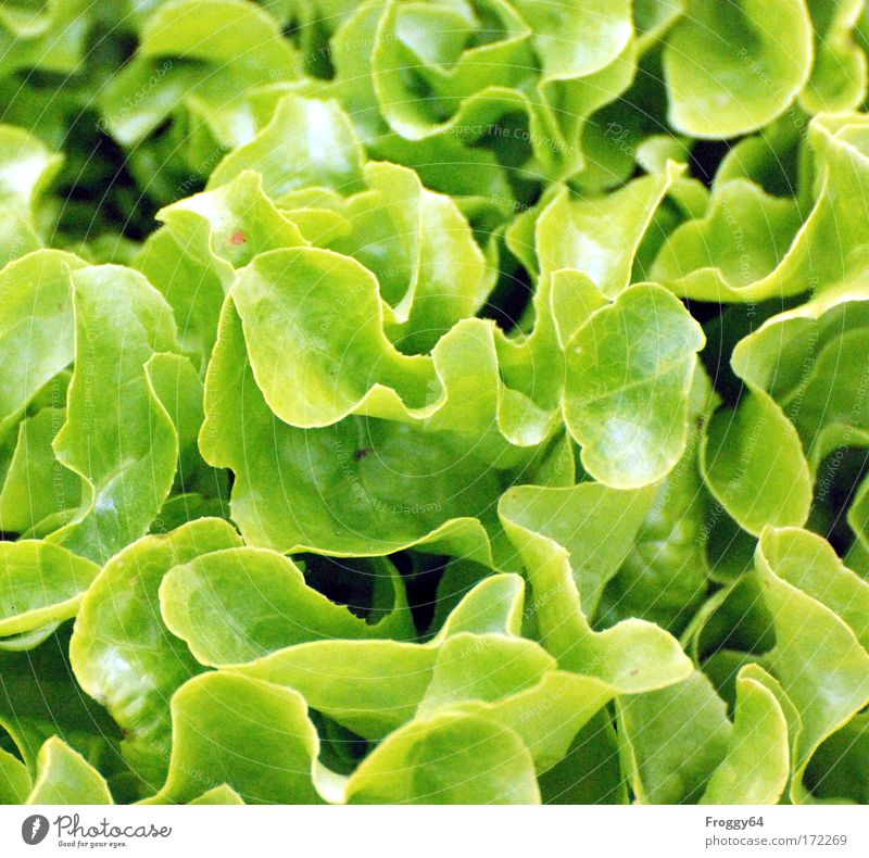 salad Colour photo Exterior shot Day Bird's-eye view Downward Nature Plant Agricultural crop Growth Fresh Healthy Green earth water growth