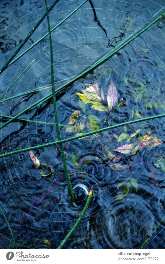 case Exterior shot Experimental Pattern Environment Water Drops of water Rain Lakeside Wet Blue Nature Puddle