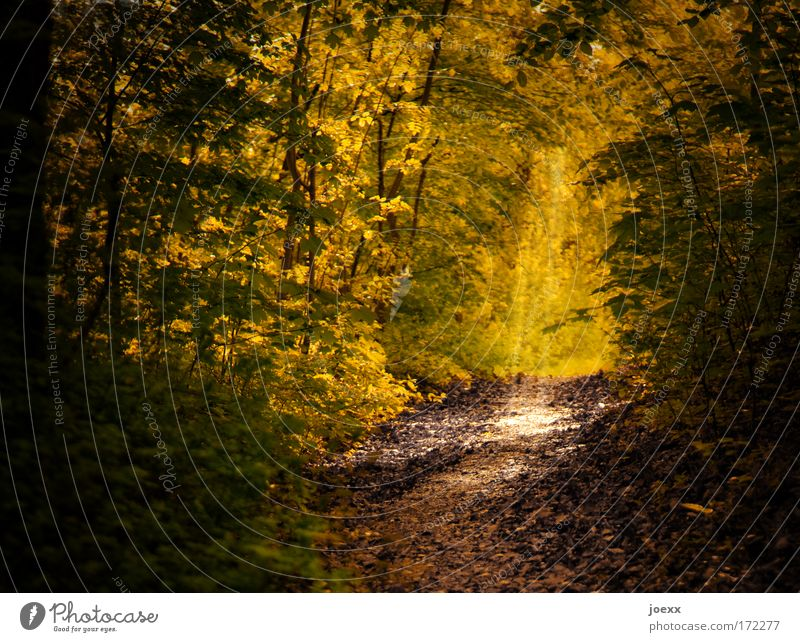 Way into the light Colour photo Exterior shot Copy Space left Day Light Shadow Contrast Sunbeam Nature Earth Sunlight Tree Forest Old Bright Positive Brown