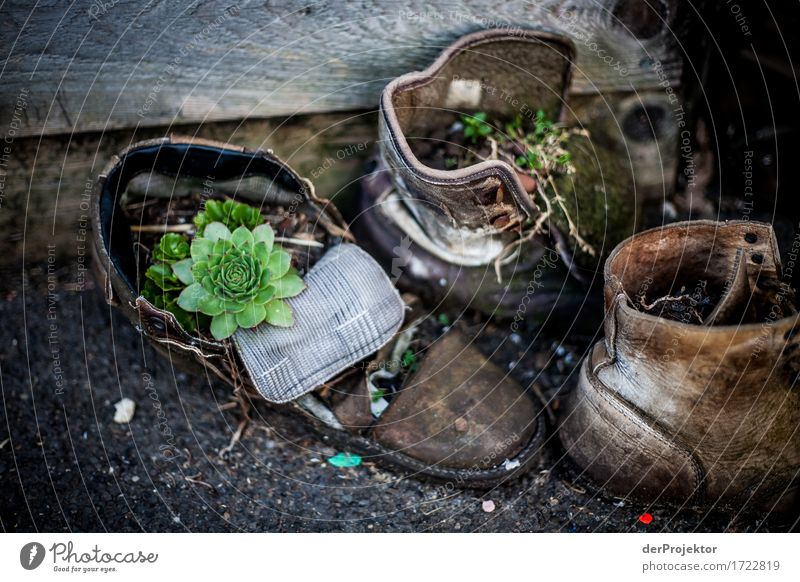 Do not leave your shoes outside for too long. Lifestyle Vacation & Travel Tourism Trip Adventure Sightseeing City trip Hiking Environment Nature Summer Plant